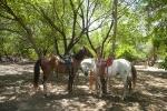 Rancho Santana Horses. Credit: ISA/ Rommel Gonzales