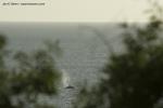 Whales. Credit: Jan K Glenn/casa-ensueno.com